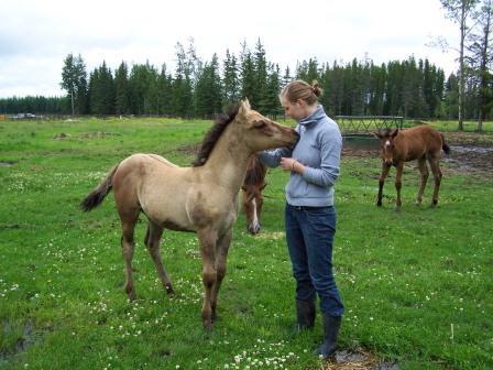 pferde farmstay kanada