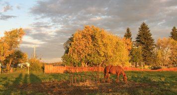 farmstay kanada seasons