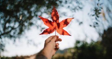 kanadische snacks und gerichte