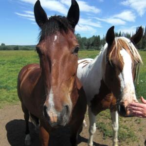 Farmstay Kanada, Farmerin Marie, Pferde