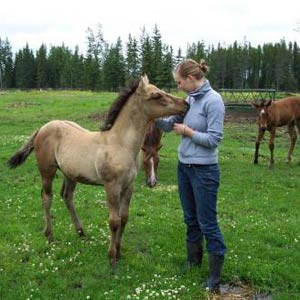 Farmstay Kanada, Erfahrungsbericht, Carolin, Pferde