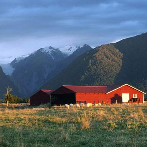 Farmstay Neuseeland, Step by Step, Work and Travel, Farm
