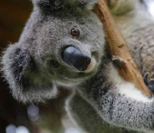 Schüleraustausch Australien Landesweit Rabatt