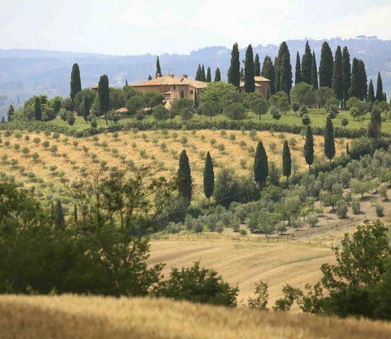 schueleraustausch-italien-toscana-landschaft-baeume