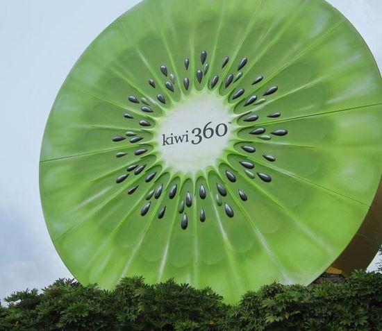 schueleraustausch-neuseeland-kiwi-riesig