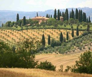 Schueleraustausch Italien, Toscana, Landschaft, Baeume