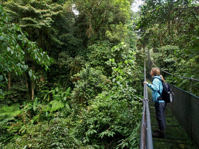schueleraustausch-costa-rica-haengebruecke-im-urwald