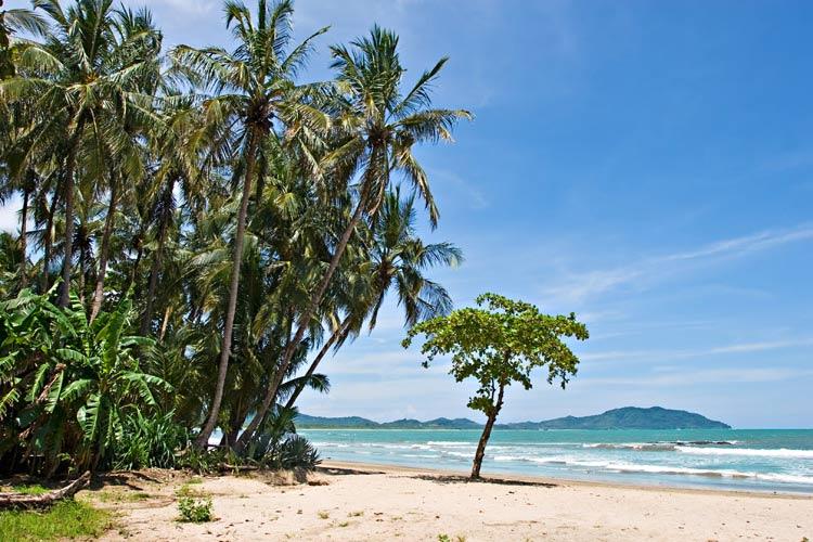 schueleraustausch-costa-rica-strand-baum