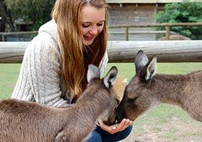 schueleraustausch-australien-maedchen-mit-kangaroos-fuettern