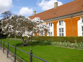 schueleraustausch-daenemark-schlosspark-frederiksberg-baumbluete