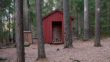 schueleraustausch-finnland-wald-huette-holz