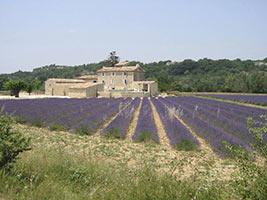 schueleraustausch-frankreich-lavendelfelder-haus