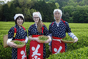 schueleraustausch-japan-gastfamilie-ernte-tee