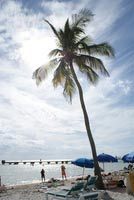 schueleraustausch-usa-reisen-florida-strand-palme