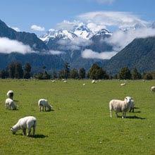 Praktikum Australien, Schafe, Wiese, Berge