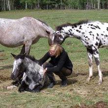 Farmstay, Kanada, Maedchen, Pferde