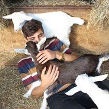 Farmstay Neuseeland, Junge, Schafe, Stall