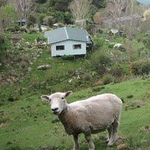Farmstay, Neuseeland, Schaf, Huette