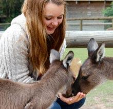 Au Pair, Australien, Maedchen, Kaenguru, fuettern