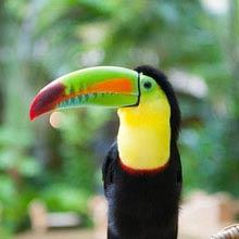 Costa Rica nachgewiesene Arten, 500 000