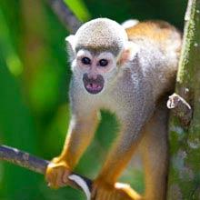 Schueleraustausch Costa Rica, Affe, Baum