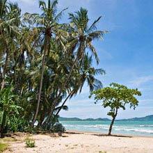 Schüleraustausch Ecuador, Strand, Palmen
