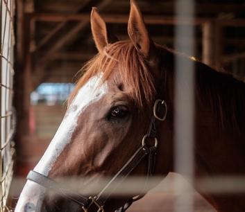 Farmstay Neuseeland, Pferd, Stall