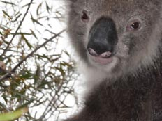 erfahrungsbericht-au-pair-australien-karina-zoo
