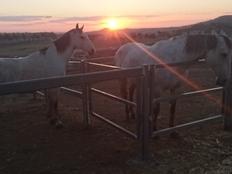 Farmstay, Australien, Luise, Pferde