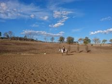 Farmstay, Australien, Luise, Pferd