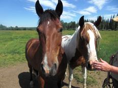 erfahrungsbericht-farmstay-kanada-cathrin-siewert-horse