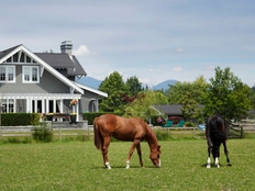 erfahrungsbericht-farmstay-neuseeland-lucia-johannigmann-view