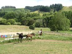 Erfahrungsbericht-farmstay-neuseeland-pferde