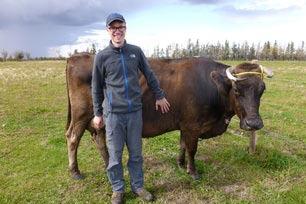 Erfahrungsbericht, Farmstay, Kanada, Felix, Kuh